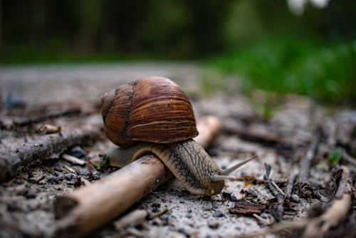 Slug & snail explosion: How to protect your garden from slugs and snails?